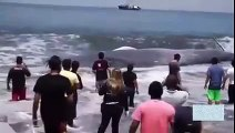 OMG!!! Giant Whale found at the bank of Sea