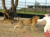Arab and Lion - who wins _