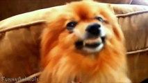 Funny Dog Smiling - Best Dogs Smiling Compilation