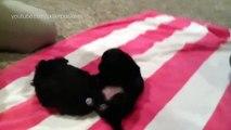 Buzz : Ces chiens qui restent coincés sur leur dos vont vous faire bien rire !