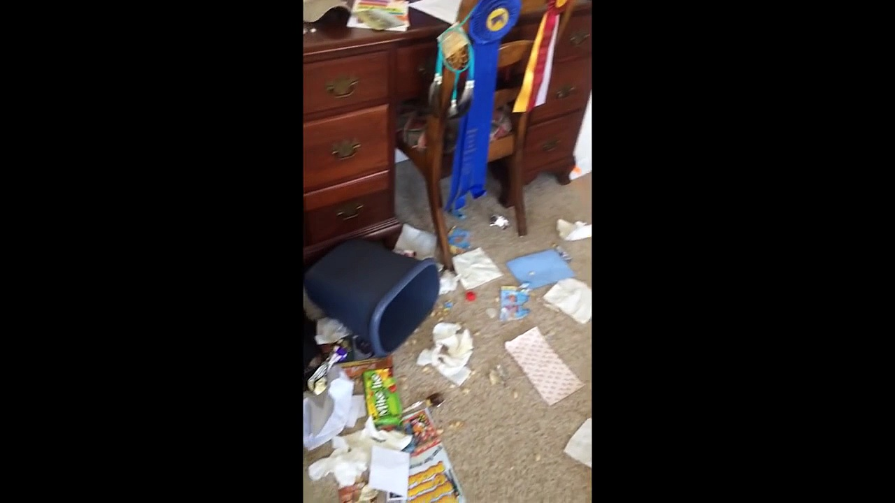 Guilty Dog Sneaks Away From Scene of the Crime