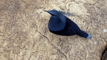 Zoo de Beauval - Un bel oiseau