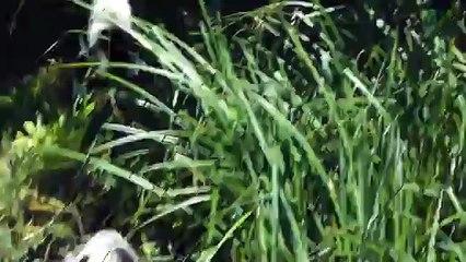 Zoo de beauval -