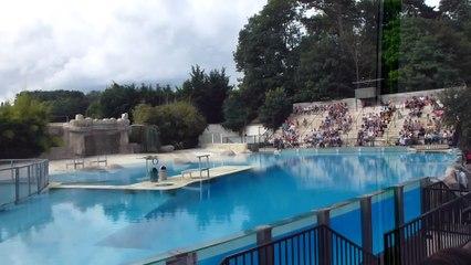 Zoo de Beauval - Vol de rapaces