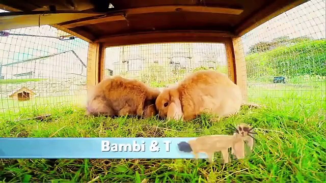 Furry Friends – Rabbits – Episode 3