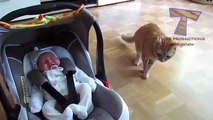 Cats and dogs meeting babies for the first time Cute animal compilation