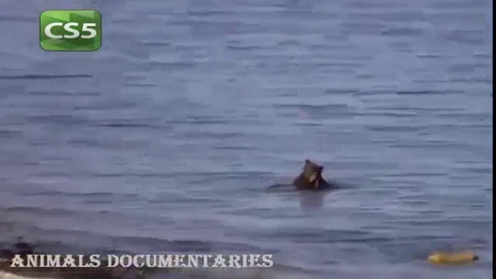 National Geographic Documentary Animals 2015_Wildlife Lions Animals