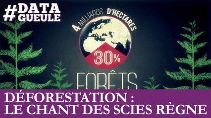 Déforestation : le chant des scies règne #DATAGUEULE 53