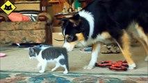 Gatos divertidos Graciosos de Perros Graciosos de Mascotas compilación de videos Graciosos de animales en 2015