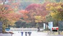 Spot-20151102 viewfinder FALL FOLIAGE ON NAMSAN MOUNTAIN 20151102 뷰파인더 남산 단풍