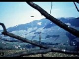 Billy Meier ★ Tape 14 UFO Pleiadian Semjase Beamship Video Photos  Billy Meier Contact Notes 5