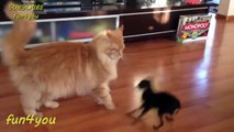 The best of 2016 Cat Is Very Patient With This Dog!! ★ funny cats, cute cats, cute kitten, crazy cats, hilarious cats