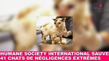 """Humane Society International"" sauve 41 chats de situations de négligences extrêmes ! Maintenant dans la minute chat #90"