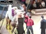 Elle déchire son jean lorsqu elle monte sur un chameau