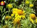 Czas zwierząt Pszczo + Sęp, dla dzieci