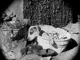 Vida de perros 1918 - Charles Chaplin (Película completa) - Subtitulado en español