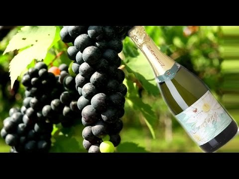 Grapes Original Wines in Hatten