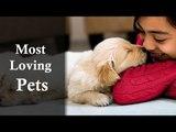 World's Most Loving Pets