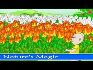 Nature's Magic - Fun And Learn Series For Kids in English