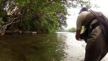 Belle truite en sèche  en grande rivière ~ Pêche à la mouche