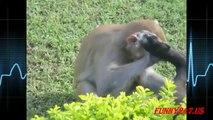 Dog Mating Monkey And Monkey Humping Dog 2016 [NEW]
