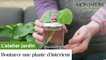 Comment bouturer une plante d'intérieur ?