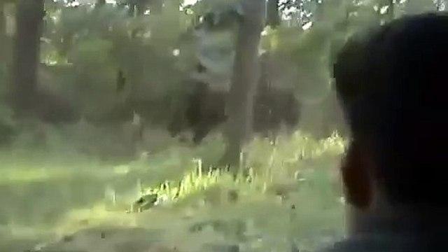 KILLER ELEPHANT ATTACK IN KERALA INDIA 2015