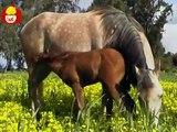 Czas zwierząt Koń + Kaczka, dla dzieci