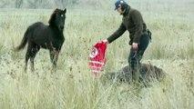 Un héro libère un cheval enchaîné dans un champ