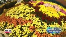 Spot-20151008 viewfinder GOYAG AUTUMN FLOWER FESTIVAL 20151008 뷰파인더 고양 가을꽃 축제