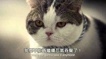 Cat jefe led de los gatos a su resistencia a la maestra de Baño de la tiranía de los subtítulos en Chino.