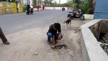 Ce chien mourrant remue la queue quand il voit ses sauveteurs arriver, la suite est géniale