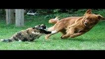 FUNNY VIDEOS Funny Cats Funny Cat Videos Funny Animals Fail Compilation Cats Fails