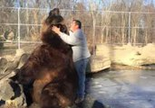 Giant Grizzly Bear Shows Softer Side Playing With Carer