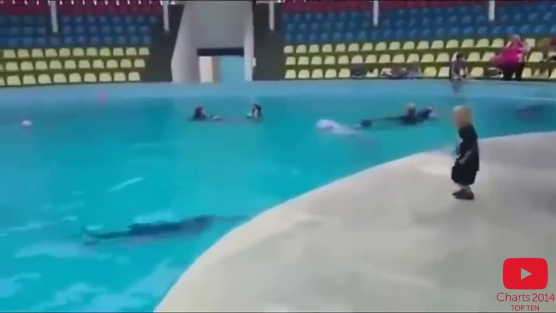 Amazing dolphins playing with kids