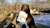 La vidéo attendrissante d'un ours qui câline son sauveur !