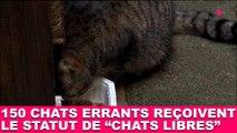 """150 chats errants reçoivent le statut de """"chats libres"""" ! Tout de suite dans la minute chat #98"""