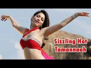South Bomb Tamannaah Bhatia's Hot Saree Photo shoot | Bollywood Beauties