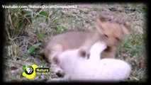 Tech Minute - Smartphones tailor-made to tough it outNature White lions documentary Royal Family - The White Lions english subtitles