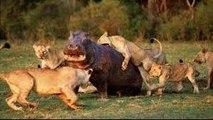 Animals Documentary_Animals Documentary Channel _Lions Documentaries Film