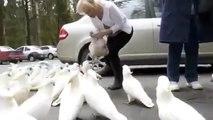Feeding wild cockatoos.