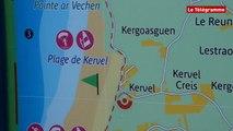 Plonévez-Porzay (29). Des centaines de sardines échouées sur la plage de Kervel