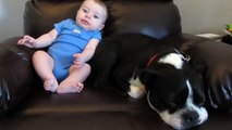 Tiny Baby Poops His Pants. Now Watch The Dog's Reaction. HILARIOUS!
