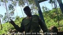 Episode 126, DRC Virunga Silverback Gorillas