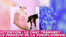 Attention ! Le chat peut transmettre le parasite de la toxoplasmose ! Plus d'infos dans la minute chat #100