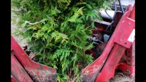 Digging of a Green Giant Arborvitae at Highland Hill Farm