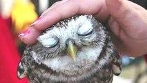 Animales Lindos De Acunar A Un Lindo Animal Videos Compilación De 2015