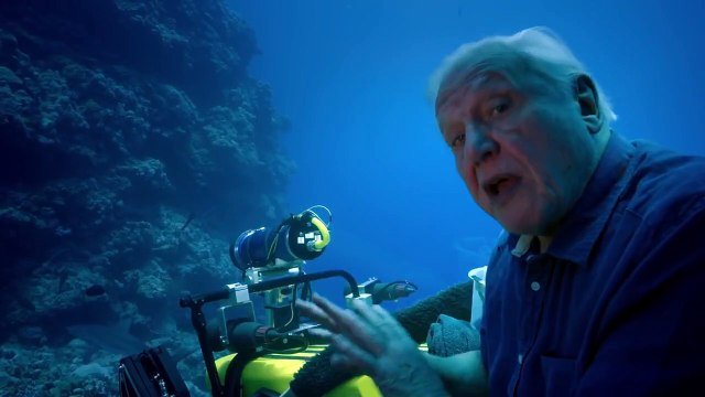 Face to face with sharks - Great Barrier Reef with David Attenborough: Episode 2 Preview - BBC