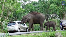 Elephant crushes Thai tourists car in mating season rampage