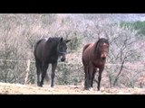 Hot mating animals cary video   New Horse mating donkey & Funny horse compilation HD